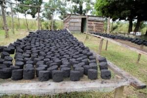 charcoal briques