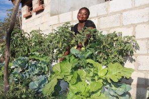 Quel futur pour l'agriculture africaine ?